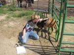 goat pic 1