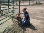 goat pic 2