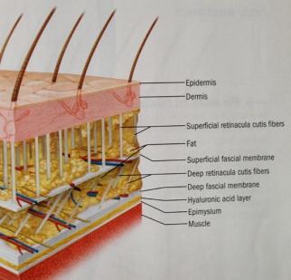 fascia-skin